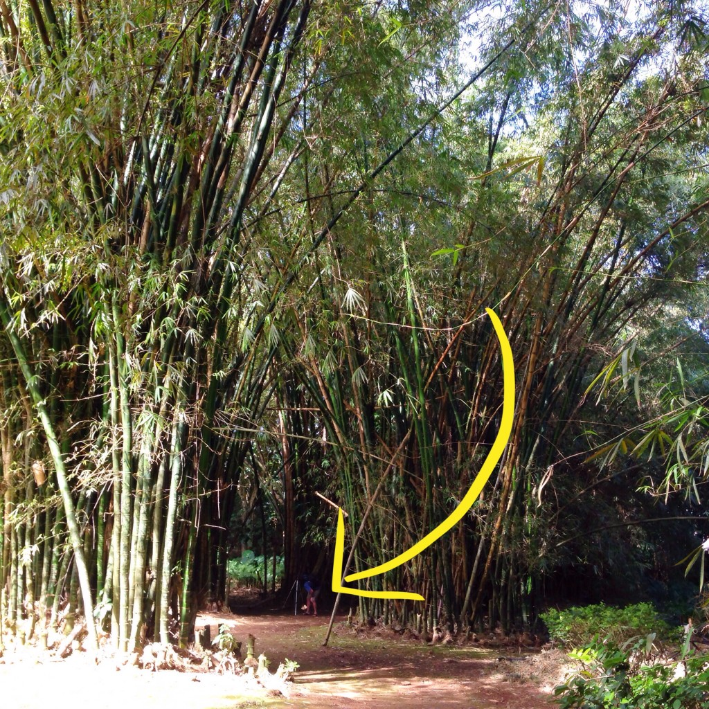 bamboo perspective